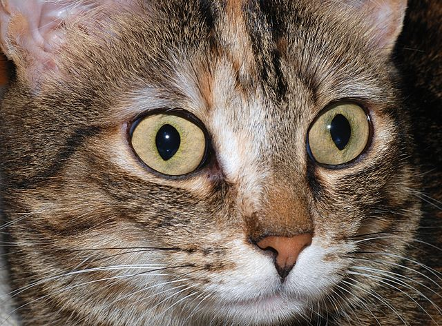 Are Violin Strings Really Made of Cat Guts?